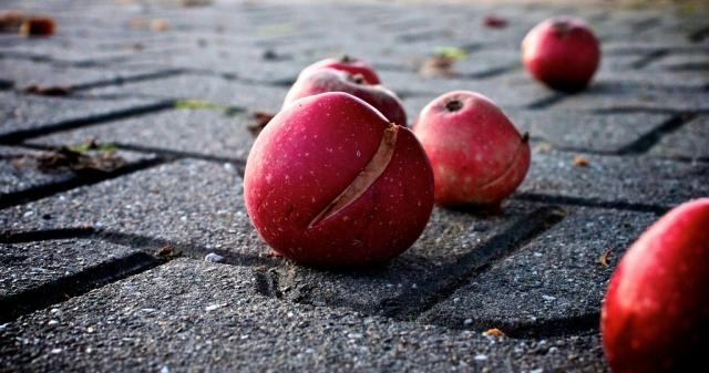 Apples_viaThomasTeichert